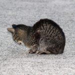 猫背の治し方!意外なストレッチ法とトレーニングで