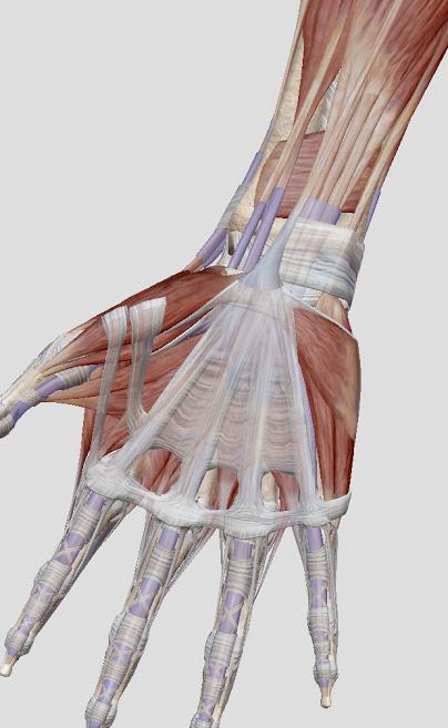 腱鞘炎になる前に!手首のコンディショニング